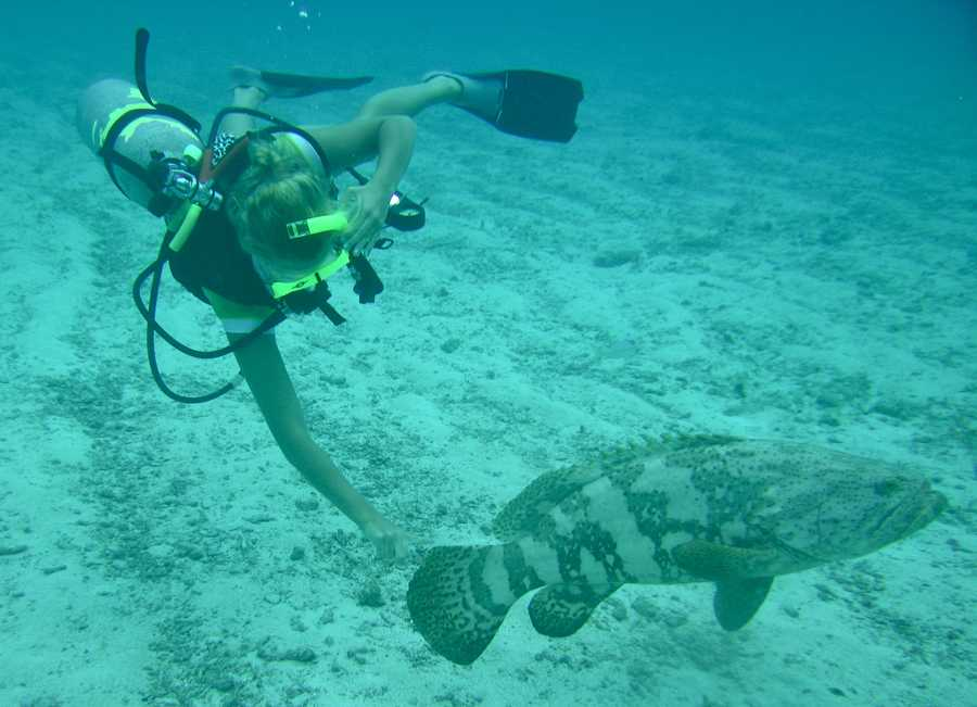 Deep+Sea+Diving+on+Hold