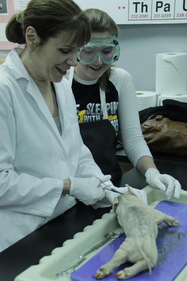 Mrs. Lisa Moreno, science, helps Kendal Bartochowski (11) cut into the brain of the fetal pig.  The brain of a pig had similar anatomy of a human brain.