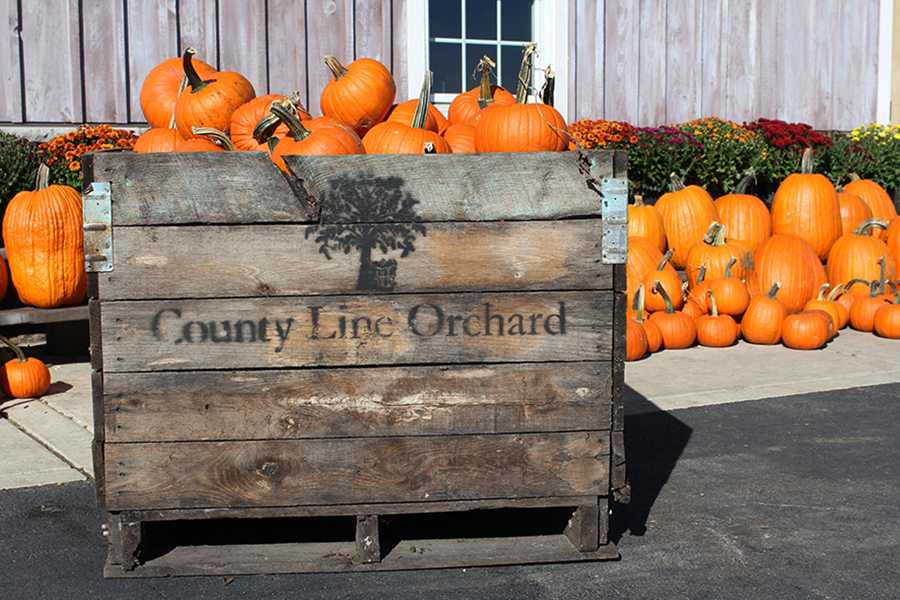 A+barrel+of+pumpkins+sits+outside+of+the+main+entrance+to+the+County+Line+Orchard+gift+shop.+Visitors+could+purchase+pumpkins+here+and+look+at+flowers.+%0A