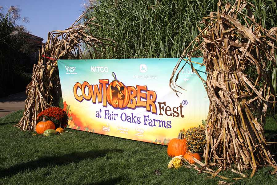 10/9/16 Cowtober fest Gallery