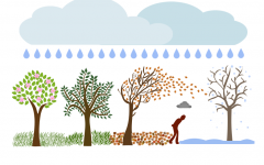 A person is seen walking through trees that symbolize the months; in the image he is just starting to go through winter. This image was meant to show that they are upset going through the winter and fall months, shown through the cloud above their head.