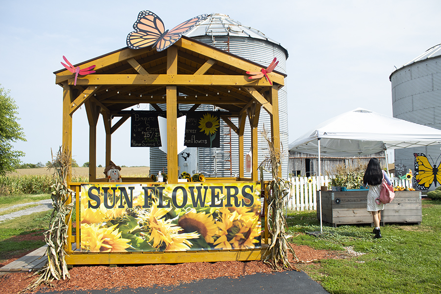 The owners of Happy Harvest Sunflowers take pride in their work and are more than happy to share their beautiful crops with the public.  Stopping by will surely brighten anyone's day!